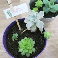 Offrir des plantes : le cadeau écolo !